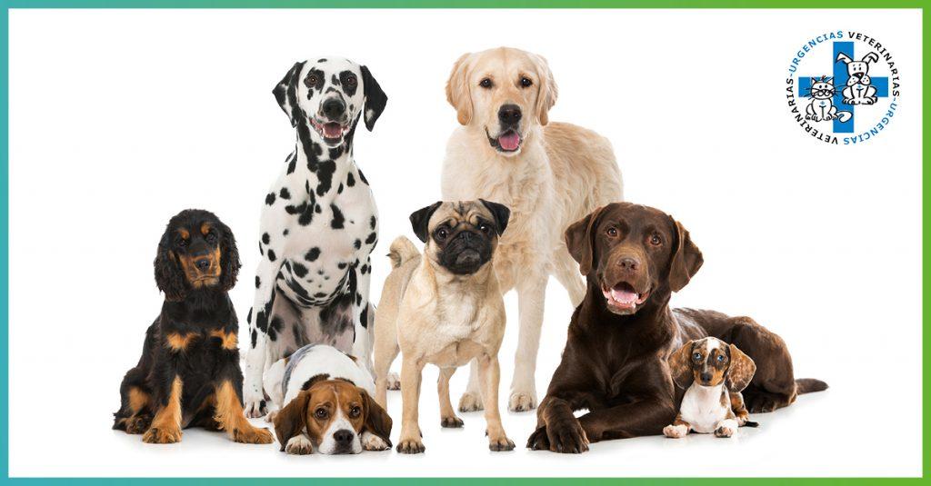 La epilepsia afecta a un 2,5% de los perros