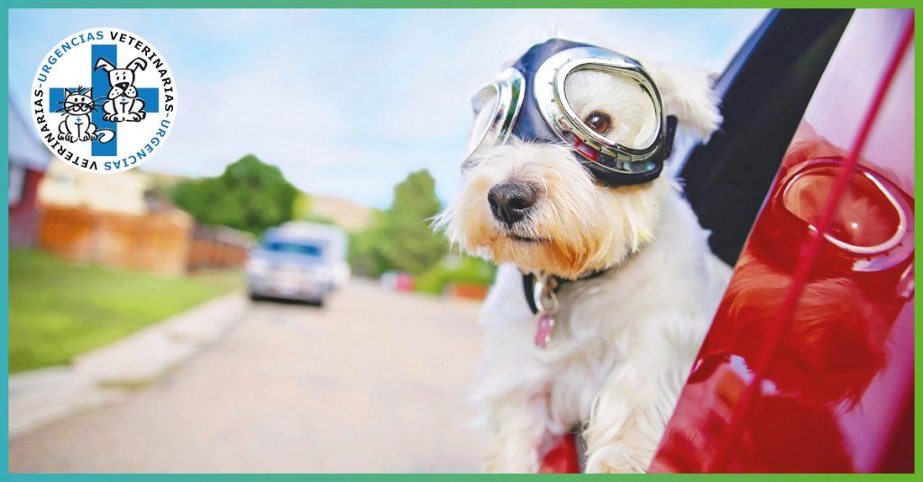 Cómo deben viajar nuestras mascotas