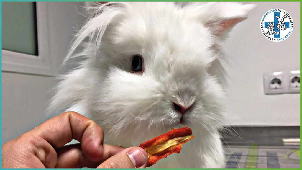 Mi conejo se come sus propias heces