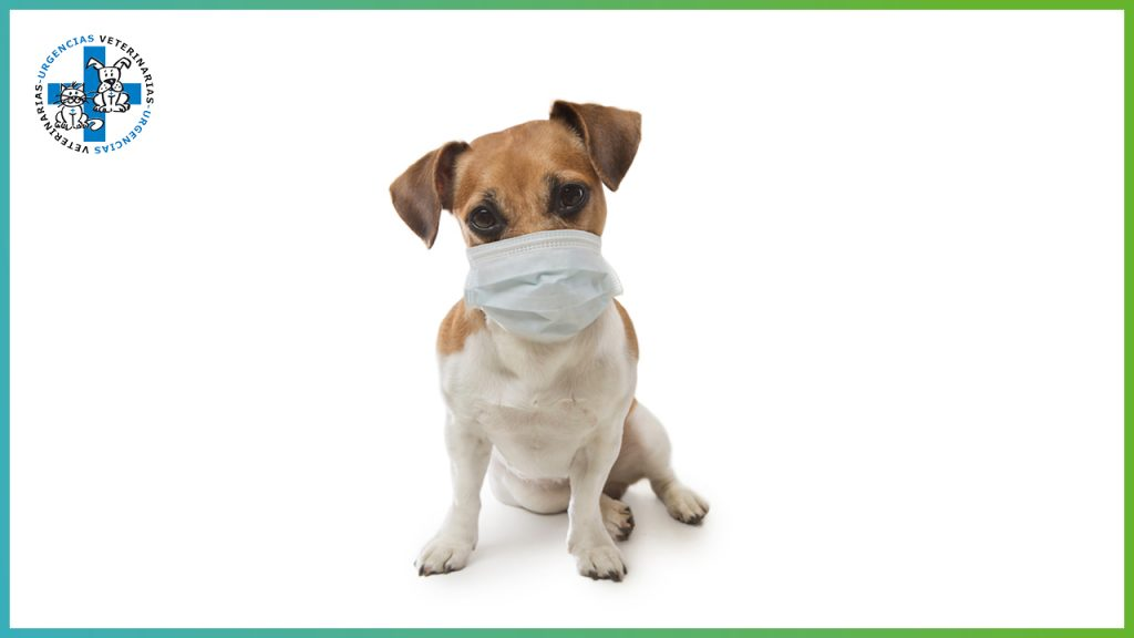 ¿El coronavirus afecta a nuestras mascotas?
