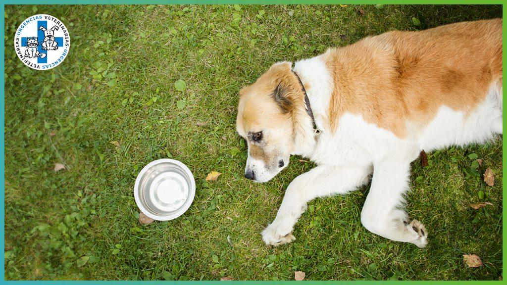 El golpe de calor en perros