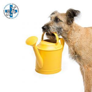 Es importante que el animal disponga siempre de agua fresca